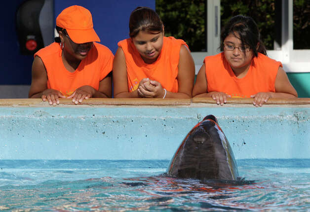 METRO --San Antonio Independent School District Young Women's Leadership Academy students from from, Mala Moore, 12, Angelica Ortega, 23 and Alicia Pereida, 12, enjoy time at the Dolphin Cove during a SeaWorld Summer Science Academy, Thursday, August 13, 2009. JERRY LARA/glara@express-news.net Photo: JERRY LARA, San Antonio Express-News / glara@express-news.net