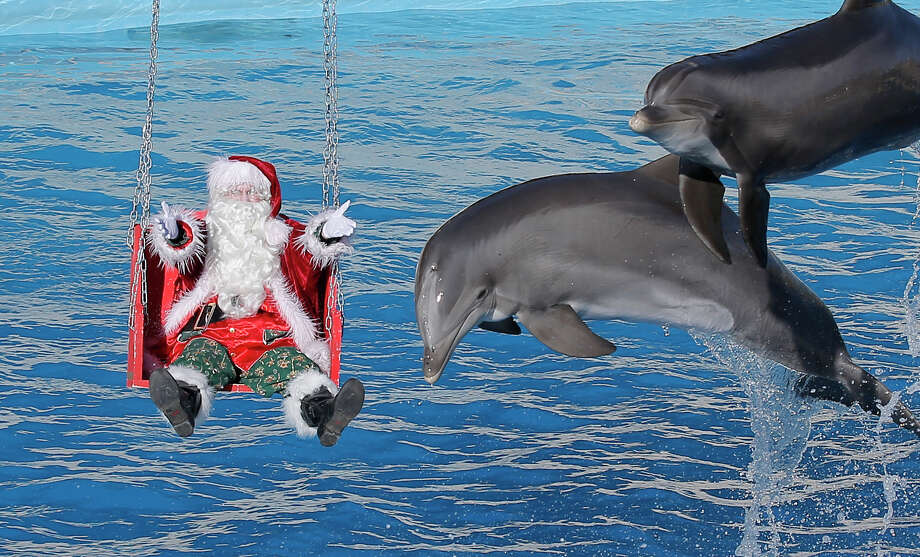 A man dressed in a Santa Claus costume poses for photographers with dolphins, at the animal exhibition park Marineland in Antibes, southern France, Tuesday, Dec. 11, 2012. Photo: Lionel Cironneau, Associated Press / AP