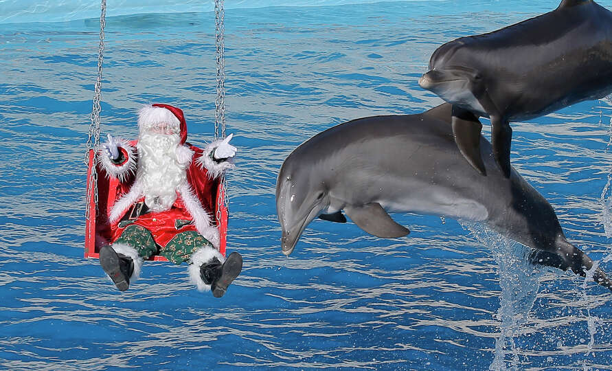 A man dressed in a Santa Claus costume poses for photographers with dolphins, at the animal exhibiti