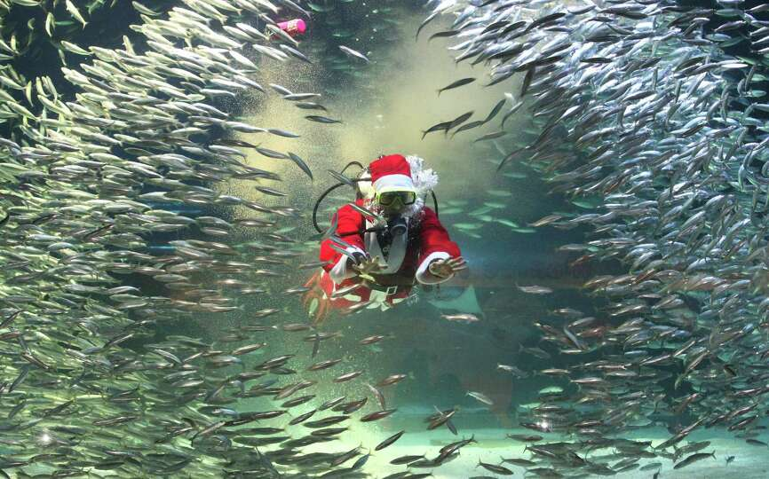 Dressed in a Santa Claus outfit, a diver feeds to sardines at the Coex Aquarium in Seoul, South Kore