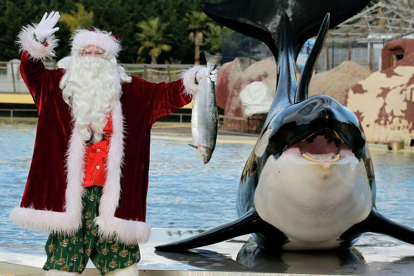 A man dressed in a Santa Claus costume poses for photographers with a killer whale named