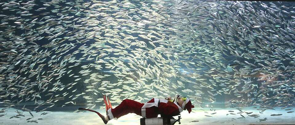 Dressed in a Santa Claus outfit, a diver performs with sardines at the Coex Aquarium in Seoul, South