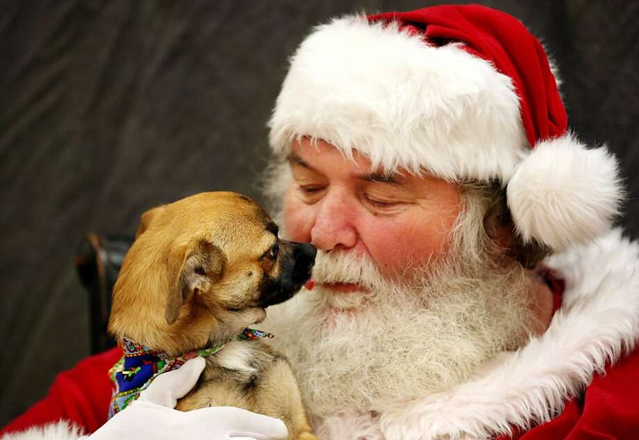 That's not Jack Frost nipping at his nose. (Santa gets a whiff of Edward the mutt at an animal shelter outside Winchester, Va.). Photo: Scott Mason, Associated Press