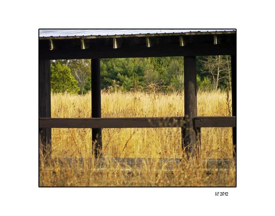 "Lynn Cianfarani, Best featuring Conservation for ""November."""