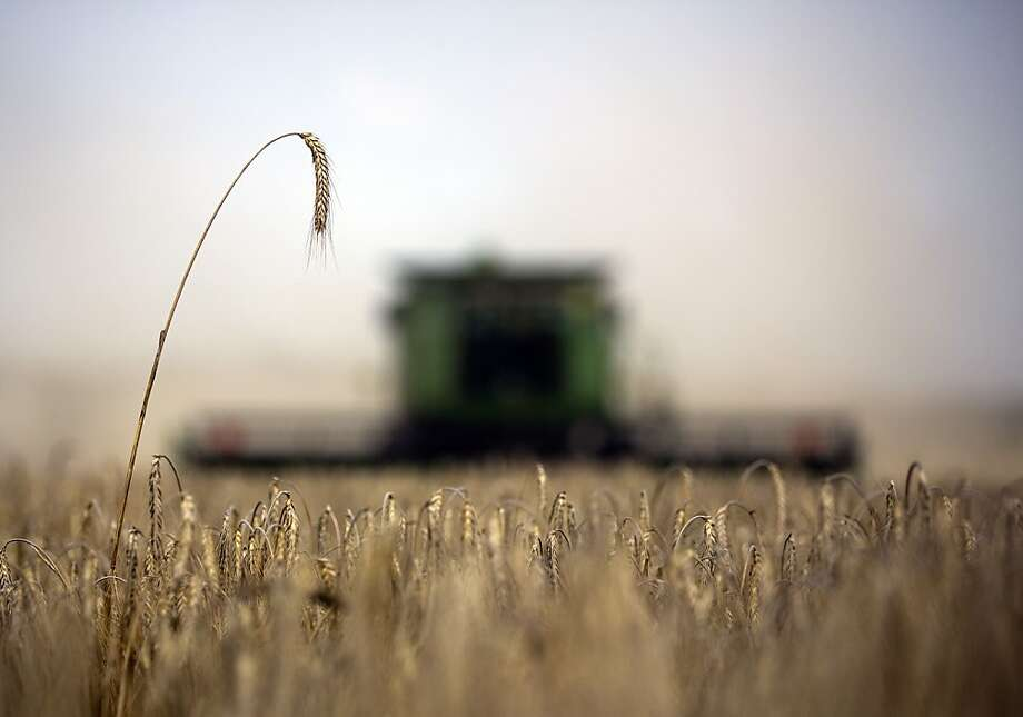 "FILE PHOTO: ""BEST PHOTOS OF 2012"" (***BESTOF2012***): Wheat ears stand before harvesting by a Deere & Co. combine harvester on a farm operated by ZAO Kavkaz near Kurganinsk in Krasnodar, Russia, on Saturday, July 14, 2012. Russia's wheat crop is estimated at 45 million metric tons, with exports at 14 million to 17 million tons, Agriculture Minister Nikolai Fedorov said. Photographer: Andrey Rudakov/Bloomberg Photo: Andrey Rudakov, Bloomberg"