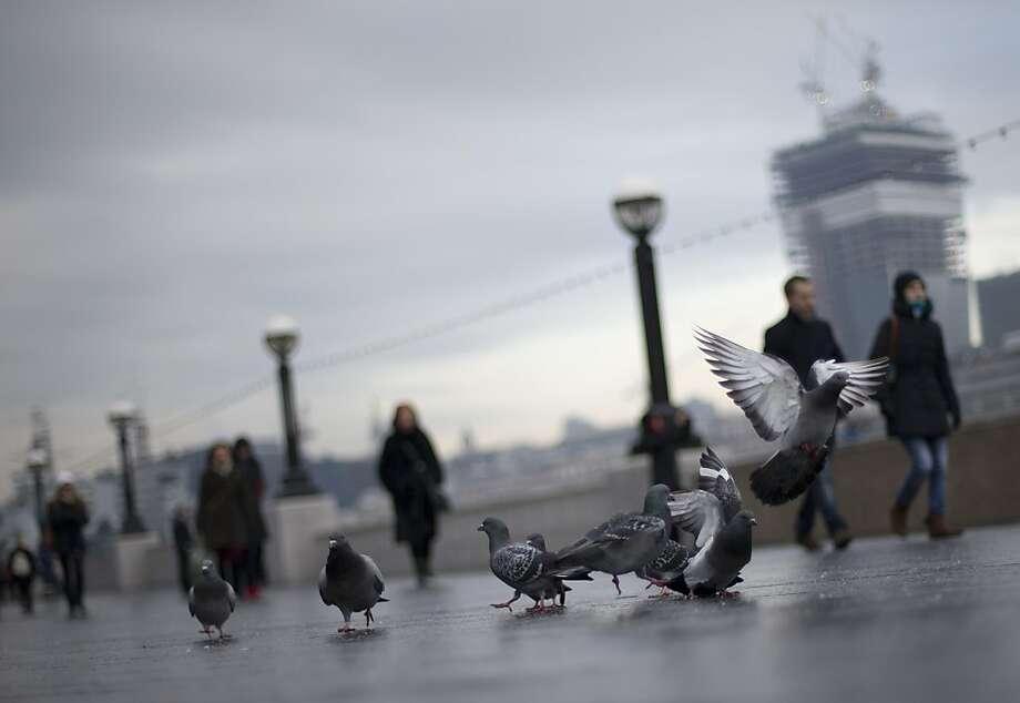 Pigeons feed on bread thrown by tourists on the south bank of the River Thames in central London, Wednesday, Dec. 12, 2012. In most parts of London pigeons are considered a pest and the public is forbidden to feed them, especially around some of the city's iconic landmarks like Trafalgar Square. (AP Photo/Alastair Grant) Photo: Alastair Grant, Associated Press