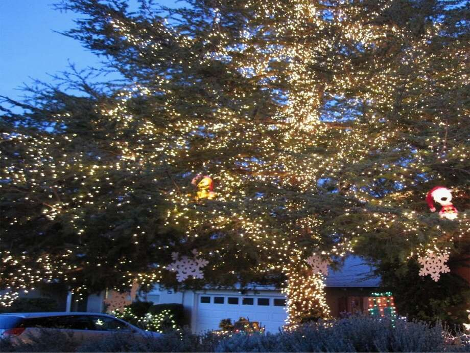 3701 Kenwood Ave. San Mateo, San Mateo County, 94403This 45 foot tall cedar tree with 30,000 lights can be seen for miles. Sequencer timer controls the tropical xmas scene. (lightsofthevalley.com)