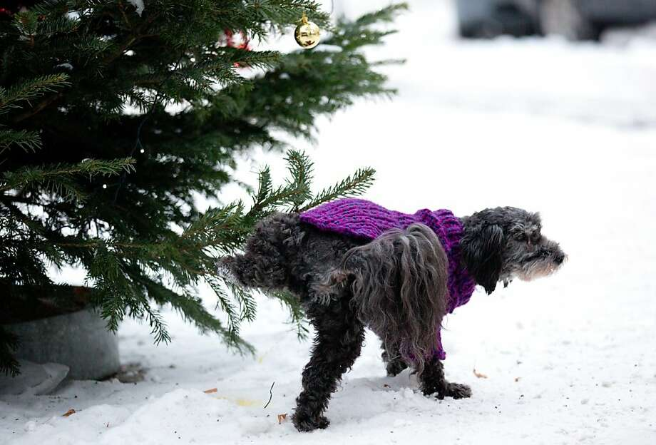 Where's your holiday spirit?!Not everyone in Berlin enjoys Christmas. Photo: Kay Nietfeld, AFP/Getty Images