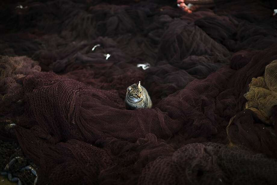 Empty netter: A cat waits inside a storehouse at the port of Barcelona for fishing boats to come in. Photo: Emilio Morenatti, Associated Press