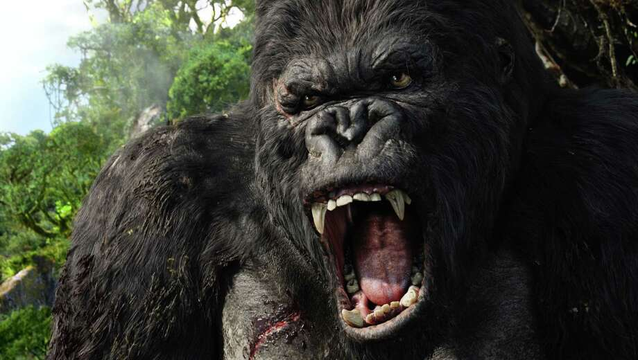 "This photo, supplied by Universal Pictures, shows King Kong. The film is a roaring success in its DVD release. Released as a single DVD and two-disc set on March 28, 2006, Peter Jackson's ""King Kong, "" logged Universal's best first-week sales in studio history, in six days selling 6.5 million copies for a take of more than $100 million.(AP Photo/ Weta Digital Ltd.,Universal Pictures) / WETA DIGITAL LTD./UNIVERSAL PIC"
