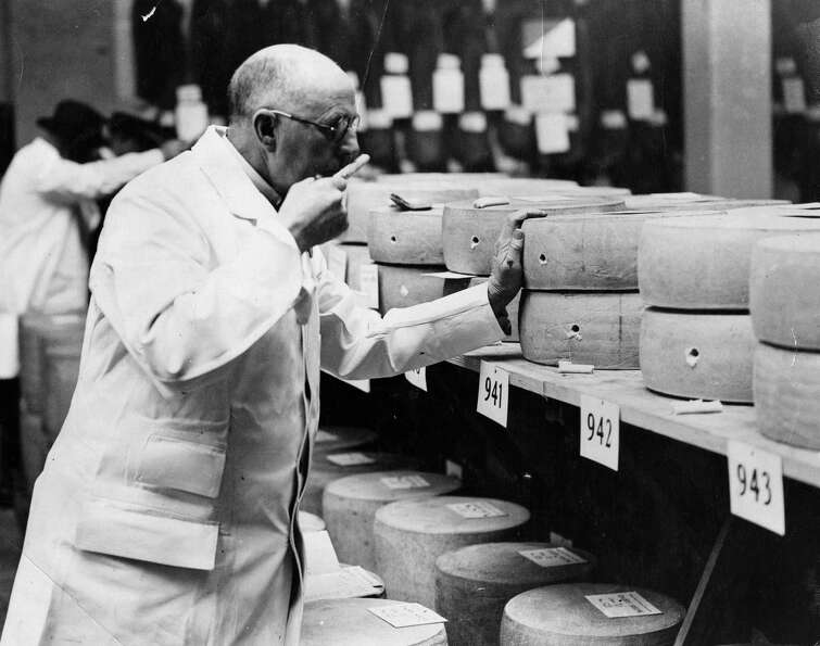 A judge smells cheeses on October 22, 1935, during the Dairy Show in Agricultural Hall, in London.