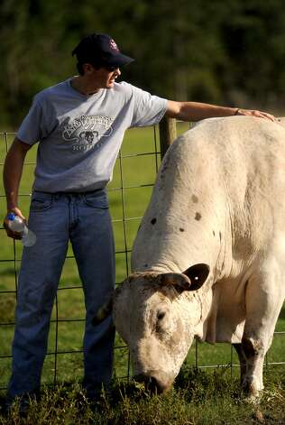 Cody Teel spends a moment petting with one of his bulls at his home in Kountze, Tuesday. Tammy McKinley/The Enterprise Photo: TAMMY MCKINLEY / Beaumont
