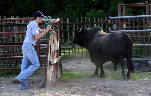 Cody Teel puts away one of his bull at his home in Kountze, Tuesday. Teel is training for the national bull riding competition. Tammy McKinley/The Enterprise Photo: TAMMY MCKINLEY / Beaumont