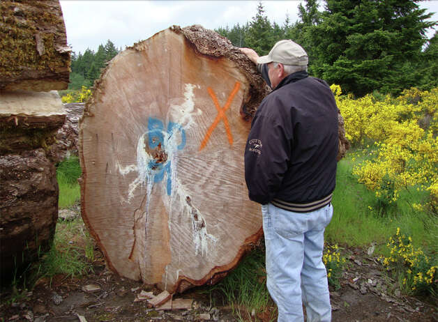 An investigator examines old-growth timber stolen from Olympic National Forest by Reid Johnston. Photo: U.S. Attorney's Office For The Western District Of Washington