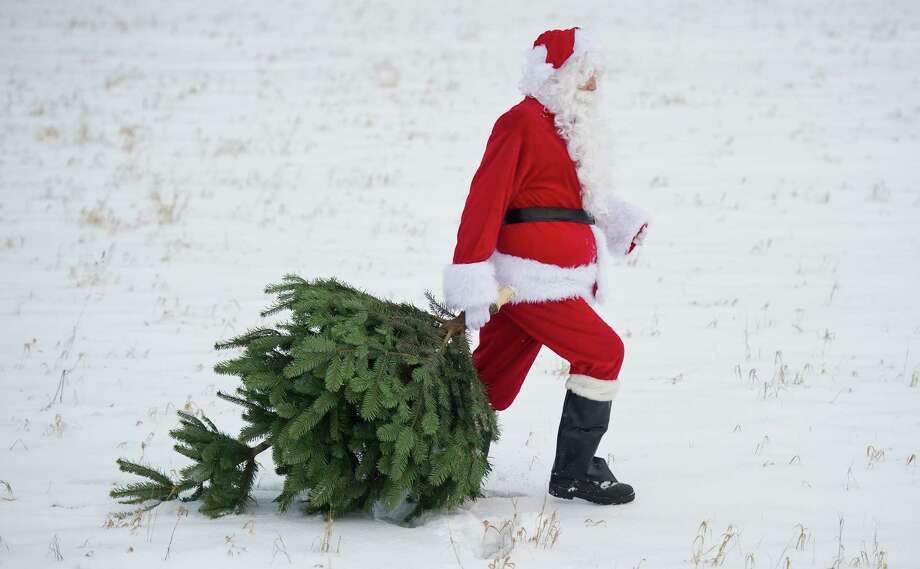 A Santa Claus pulls a Christmas tree on December 12, 2012 in Mellensee, eastern Germany. Photo: PATRICK PLEUL, AFP/Getty Images / DPA