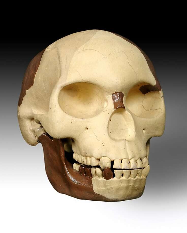 The Piltdown skull fused a centuries-old human skull with an orangutan jaw stained to look ancient. Photo: Associated Press