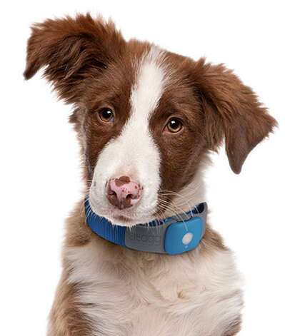 Tagg GPS Pet TrackerEven if your folks' dog isn't the type to disappear for days, you never know. (He is a dog, after all.) Fortunately, we have tools like the Tagg Pet Tracker, which will make it virtually impossible to lose Fido. The GPS-powered collar is durable and waterproof, so it won't get ruined by even the most obnoxious pet. If they ever go missing, your mom can check the Web-based map and go looking. Photo: Contributed Photo