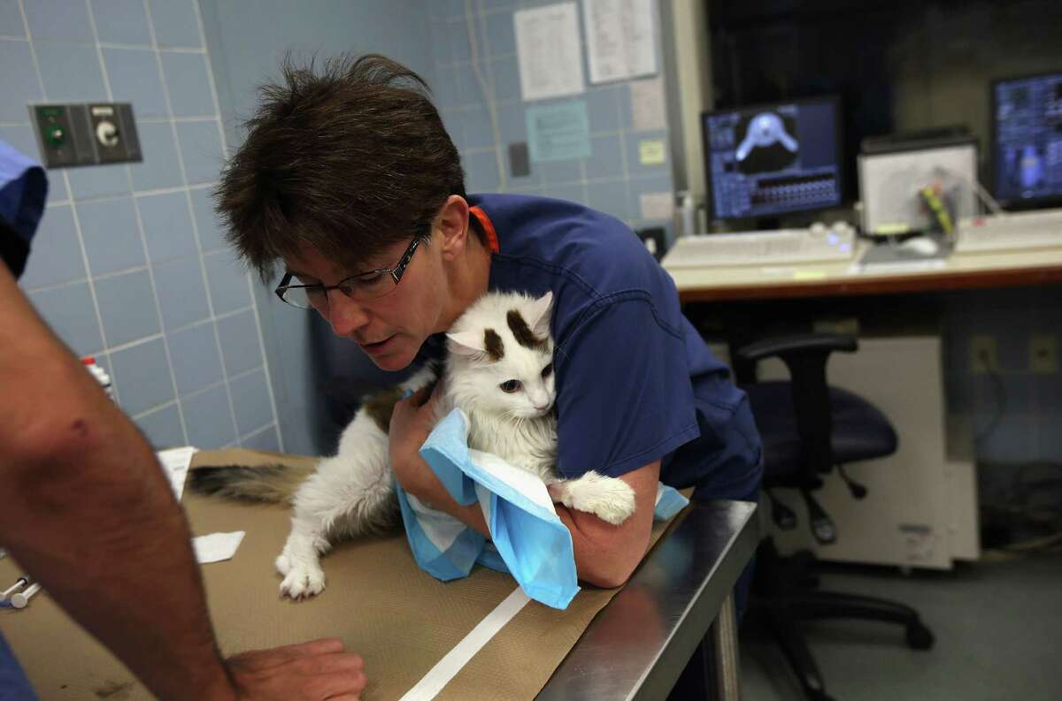 NEW YORK, NY - DECEMBER 12: Radiology technologist Lisa Seamen carries sick cat Scout while preparing him for an MRI at the Animal Medical Center on December 12, 2012 in New York City. The non-profit Animal Medical Center, established in 1910, has 80 veterinarians in 17 specialty services that treat up to 40,000 animal visits annually. Clients bring in their pets from around the country and world to the teaching hospital on Manhattan's Upper East Side for specialized high tech treatment. The American Pet Products Association estimates that Americans would spend more than $50 billion on their pets in 2012, $14 billion of that in veterinary care alone.