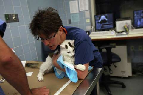 Non-profit Animal Medical Center in NYC - Times Union