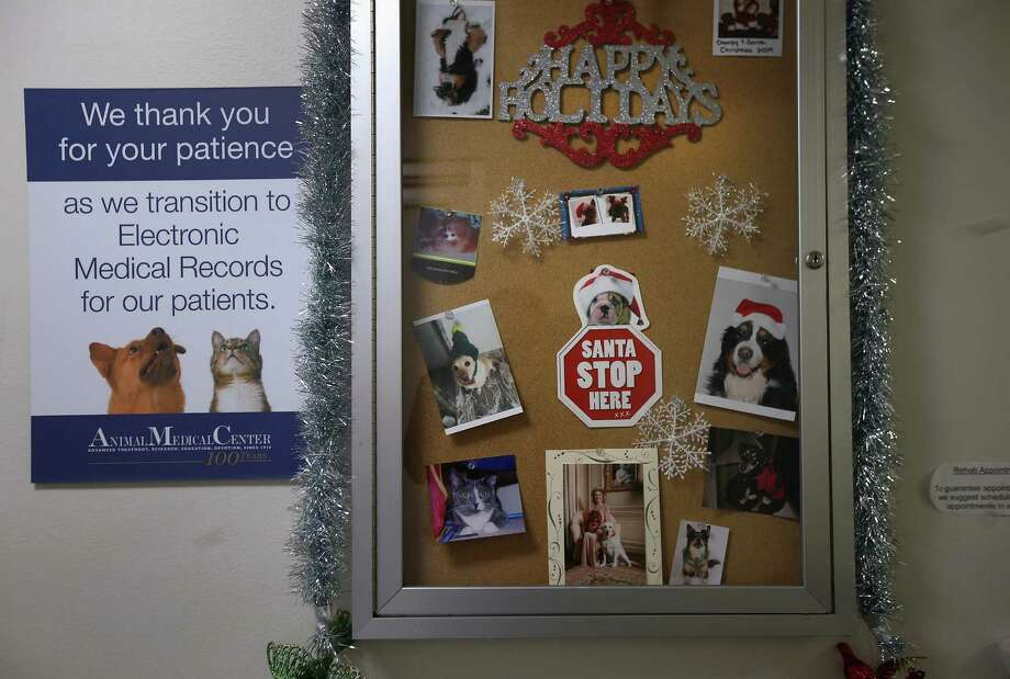 "NEW YORK, NY - DECEMBER 12:  ""Personalized"" holiday gift cards hang on display at the Animal Medical Center on December 12, 2012 in New York City. The non-profit Animal Medical Center, established in 1910, has 80 veterinarians in 17 specialty services that treat up to 40,000 animal visits annually. Clients bring in their pets from around the country and world to the teaching hospital on Manhattan's Upper East Side for specialized high tech treatment. The American Pet Products Association estimates that Americans would spend more than $50 billion on their pets in 2012, $14 billion of that in veterinary care alone. Photo: John Moore, Getty Images / 2012 Getty Images"
