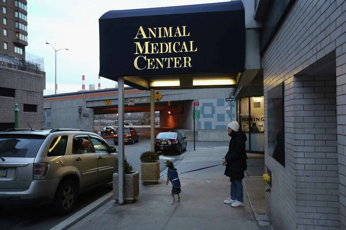 NEW YORK, NY - DECEMBER 12: A pet owner and her dog leave the Animal Medical Center on December 12, 2012 in New York City. The non-profit Animal Medical Center, established in 1910, has 80 veterinarians in 17 specialty services that treat up to 40,000 animal visits annually. Clients bring in their pets from around the country and world to the teaching hospital on Manhattan's Upper East Side for specialized high tech treatment. The American Pet Products Association estimates that Americans would spend more than $50 billion on their pets in 2012, $14 billion of that in veterinary care alone.
