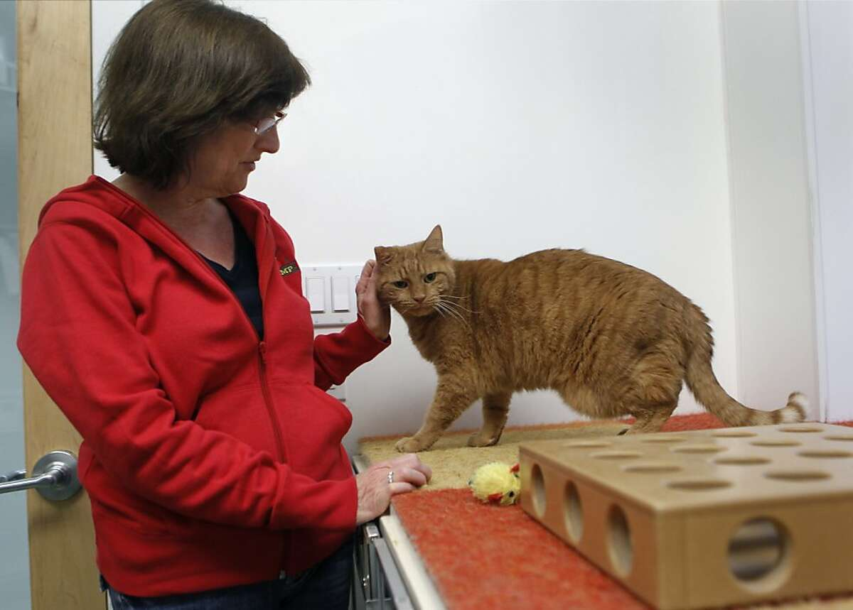 Virginia Donohue plays with Oliver, a guest staying at her Pet Camp/Cat Safari in San Francisco, Calif. on Friday, Dec. 14, 2012.