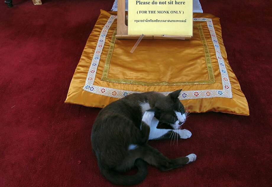 It's bad karma to sit in the monk's seat - even for a cat. So this girl is careful to stay off the pillow as she takes care of an itchy ear. Photo: Eric Talmadge, Associated Press