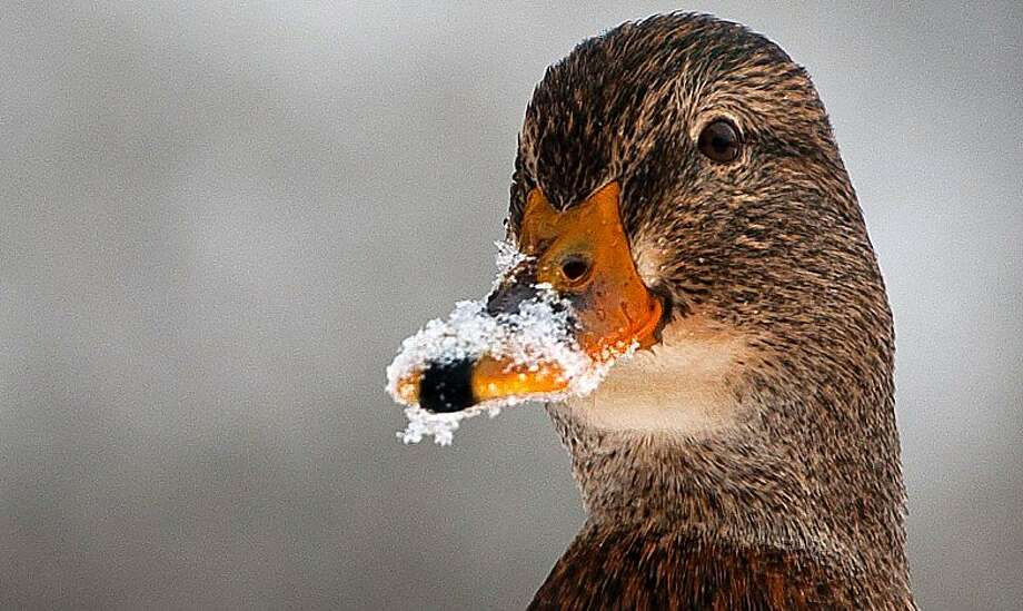 Another Cold Duck, please: Just put it on my bill. (Bad Bevensen, Germany.) Photo: Philipp Schulze, AFP/Getty Images