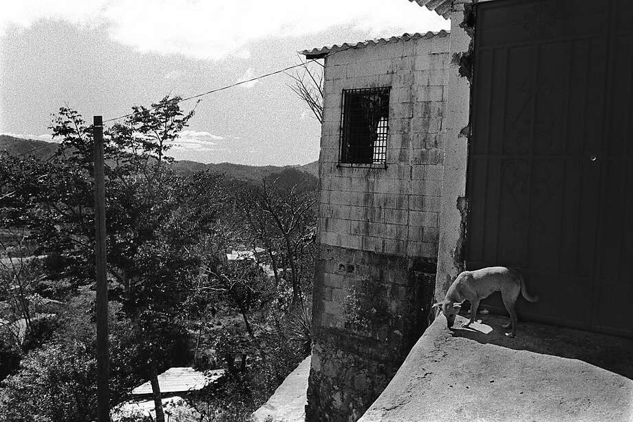 A dog on a rooftop. Photo: Juan Carlos