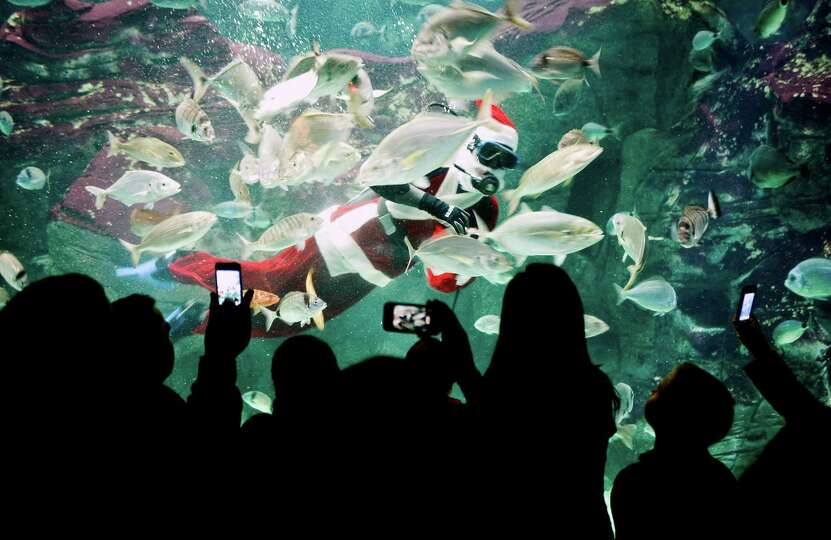Young visitors look at a  diver dressed as Santa Claus at the Creta Aquarium in the city of Iraklio,
