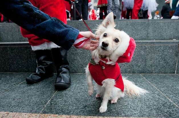 Brad Henwood of Fremont dressed up his dog Pixel as a Little Santa Claus at the Santacon event in Union Square on Saturday Dec. 15, 2012 in San Francisco, Calif.  Thousands of revelers, most dressed as Santa Claus, then took off around several city neighborhoods on a holiday inspired pub crawl. Photo: Douglas Zimmerman, SF Gate