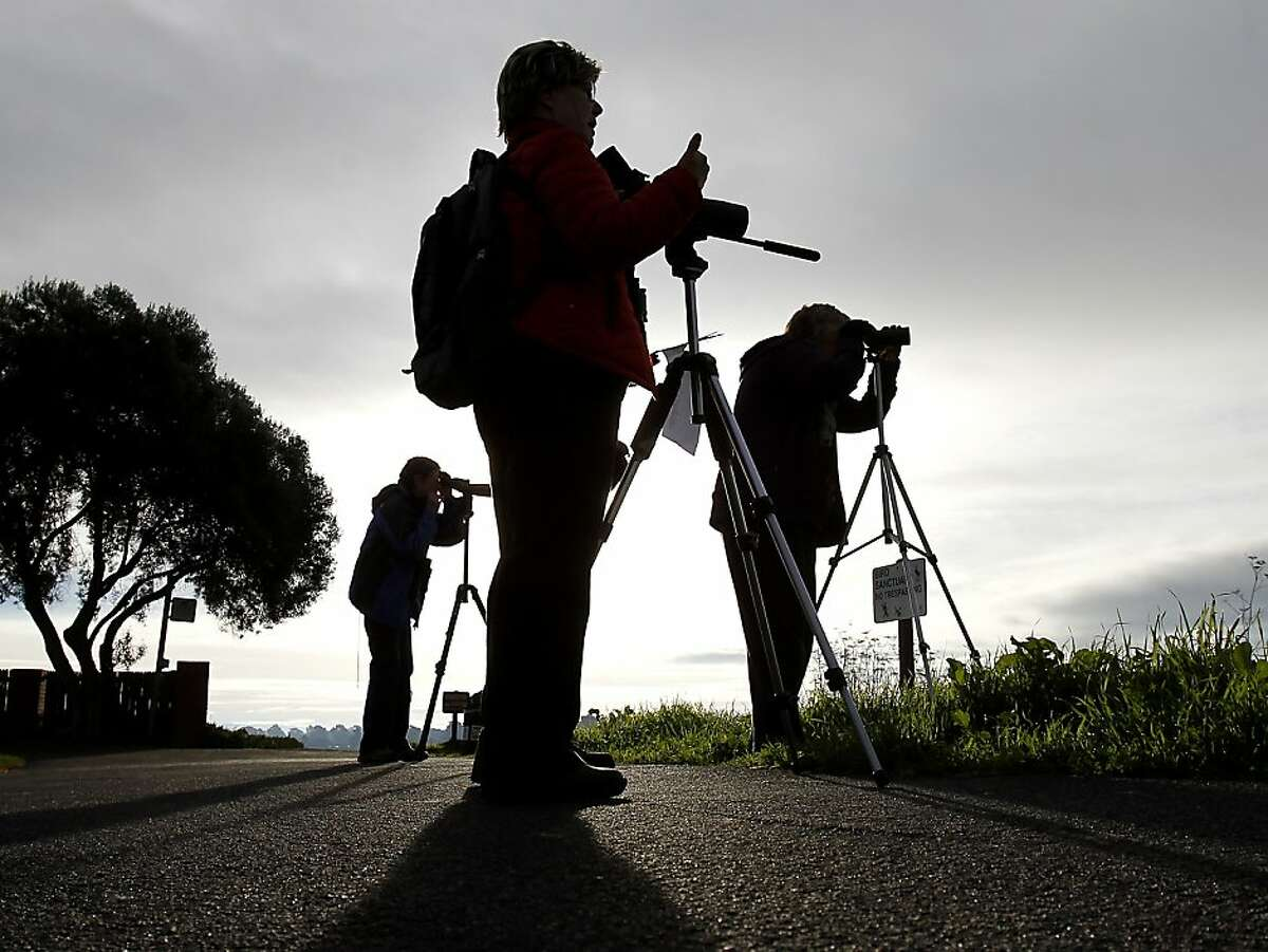 At the Elsie Roemer bird sanctuary in Alameda, bird watchers watched the shorebird population. The annual Christmas bird count by the Audubon Society took place Sunday December 16, 2012 in the East Bay. A group of veteran bird watchers took on the task in Alameda, Calif. early in the morning.