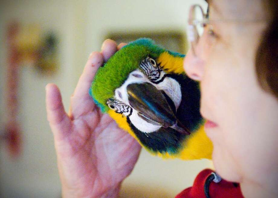Eulene Dugan with one of her pet birds Cody, a macaw, in Stamford, Conn. on Tuesday, Dec. 15,  2009. Photo: Kathleen O'Rourke / Stamford Advocate