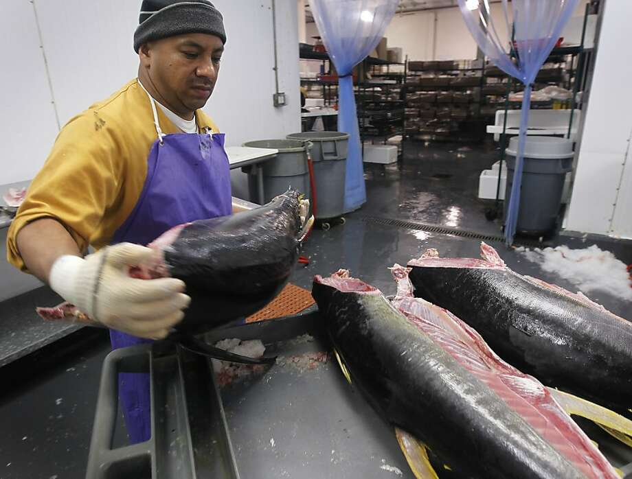 Jose Acuchi prepares yellow fin tuna for restaurant clients at Ports Seafood in San Francisco, Calif., on Friday, Jan. 14, 2011. A statewide study revealed that tuna and swordfish samples collected from grocery stores and restaurants contained as much as three times the level of mercury deemed harmful by federal standards. Photo: Paul Chinn, The Chronicle