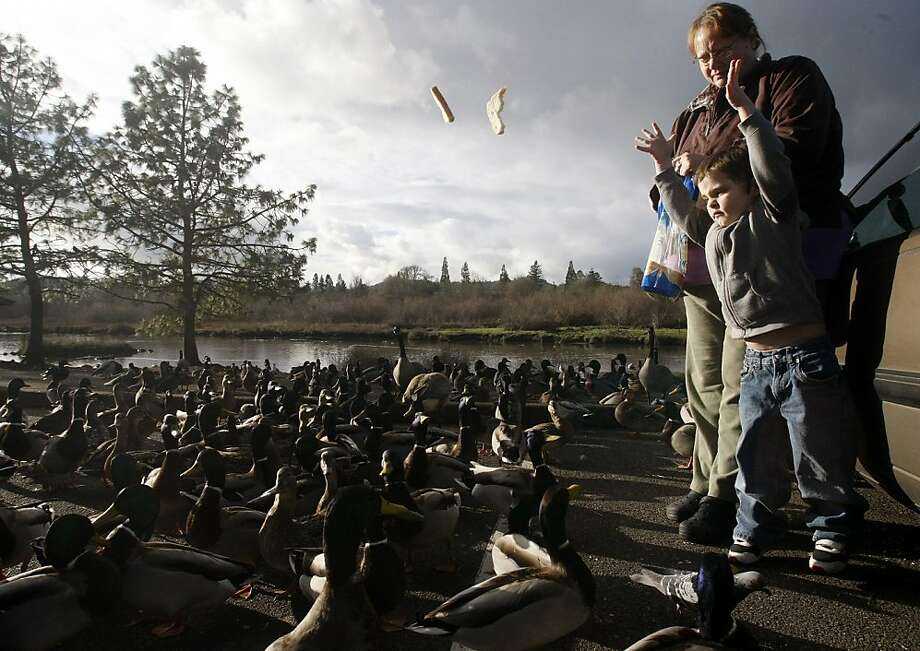 And Noah cast the bread crusts upon the multitude: Jamie Osborne watches as 3-year-old grandson Noah feeds the ducks at Stewart Park in Roseburg, Ore. Photo: Michael Sullivan, Associated Press