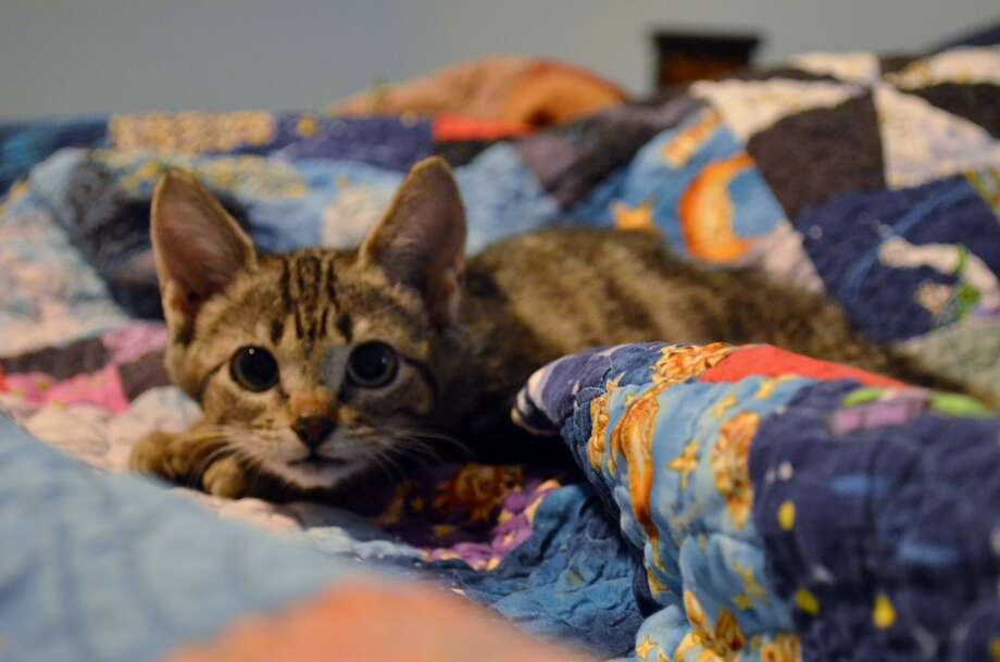 Here's what Nimrod looked like when she was adopted.
