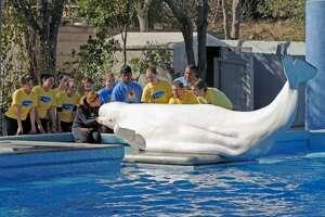photo courtesy of SeaWorld