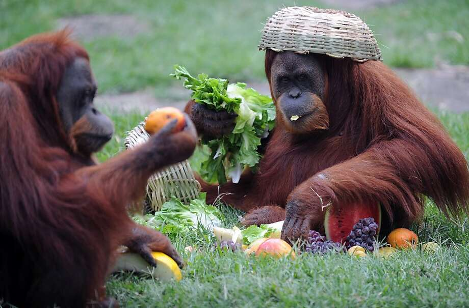 I prefer my salad tossed: The first course of a holiday meal is served at the Rio de Janeiro Zoo. Photo: Vanderlei Almeida, AFP/Getty Images