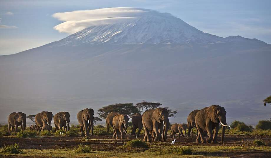 A herd of adult and baby elephants walks in the dawn light as the highest mountain in Africa Mount Kilimanjaro in Tanzania, is seen in the background, in Amboseli National Park, southern Kenya, Monday, Dec. 17, 2012, . Photo: Ben Curtis, Associated Press