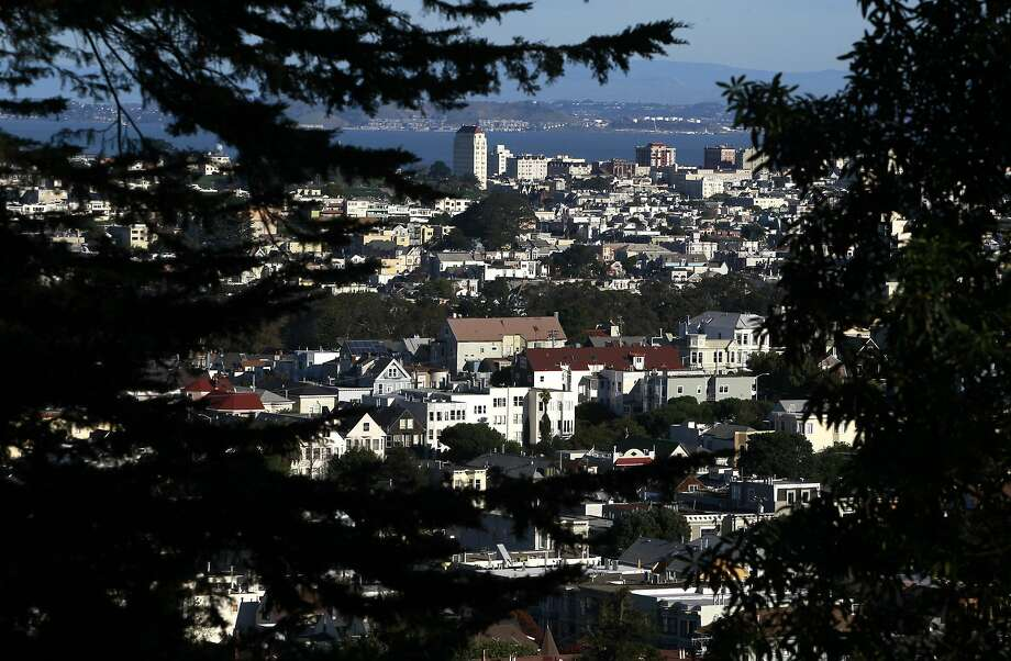 Urban vistas are visible through the thick foliage at the Sutro Forest Open Space Reserve in San Francisco, Calif. on Tuesday, Dec. 18, 2012. Photo: Paul Chinn, The Chronicle