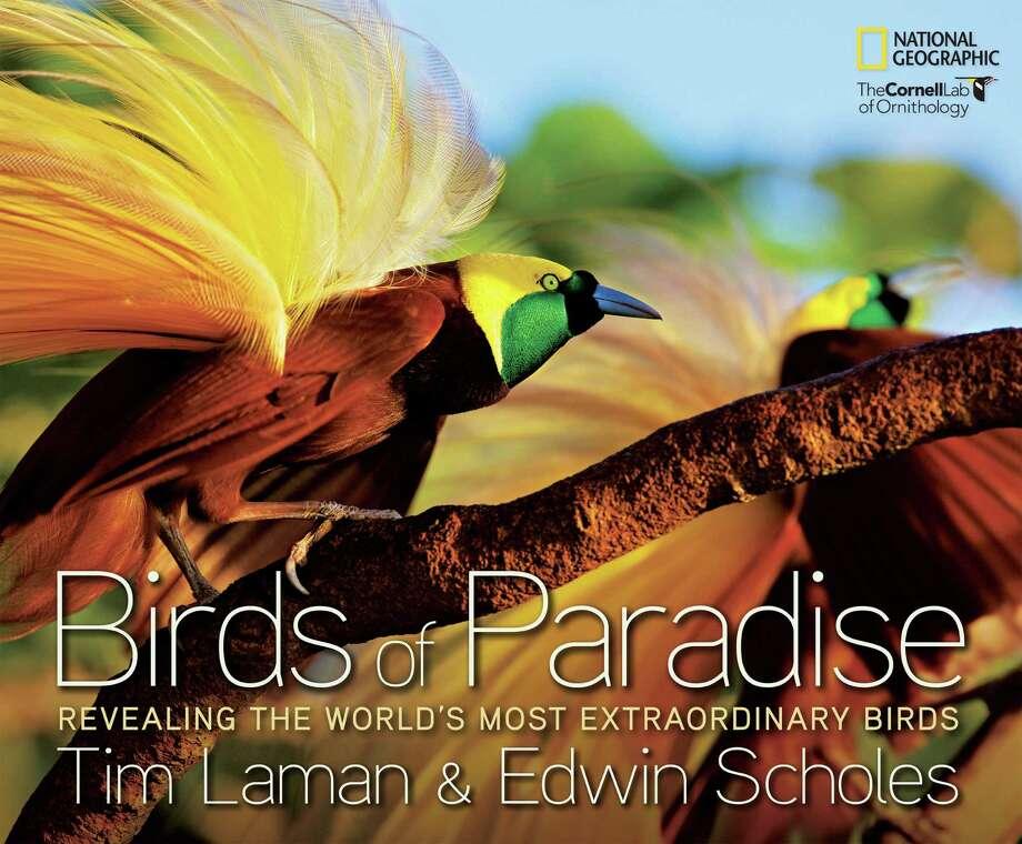 """""""Birds of Paradise.""""    """"Birds of Paradise."""" Photo: --"""