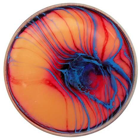 A petri dish by Klari Reis Photo: Courtesy Of Klari Reis