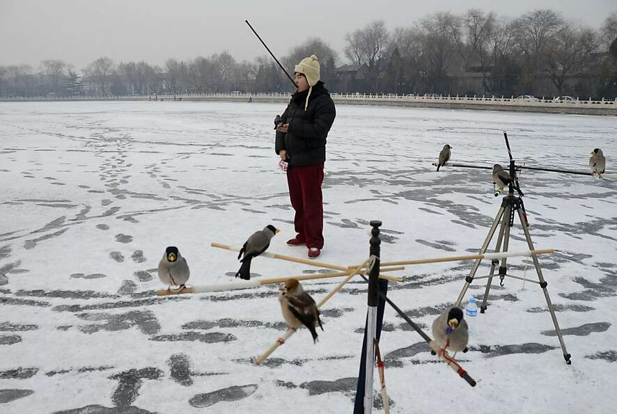 The Bird Man of Beijing plays with his trained pets on a frozen lake in the Chinese capital.