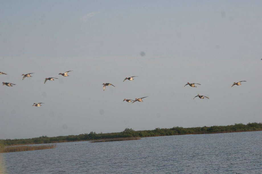 Low, incoming flights of redheads offer the classic duck hunting experience on the backside of Matagorda Island near Port O'Connor.