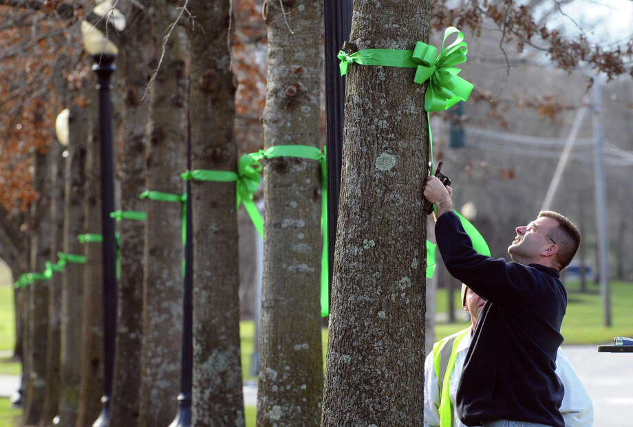 Glenn Wilson, of Equity One, places a nametag onto a green ribbon with a victim's name on it, after workers from Brickman Group, a national landscaping company, put the ribbons on 26 trees on Southbury Green property along Main Street in Southbury Conn. on Thursday December 20, 2012. The ribbons were placed in memory of the victims of the mass shooting at Sandy Hook Elementary School his past Friday. The workers also placed a tag on each ribbon with a victim's name, including Allison Wyatt, whose funeral was taking place down the street. Photo: Christian Abraham / Connecticut Post