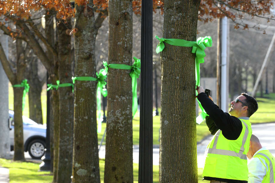 Marc Angarano, of Brickman Group, which is a national landscaping company, places a nametag onto a green ribbon with a victim's name on it, after they put the ribbons on 26 trees on Southbury Green property along Main Street in Southbury Conn. on Thursday December 20, 2012. The ribbons were placed in memory of the victims of the mass shooting at Sandy Hook Elementary School his past Friday. The workers also placed a tag on each ribbon with a victim's name, including Allison Wyatt, whose funeral was taking place down the street. Photo: Christian Abraham / Connecticut Post