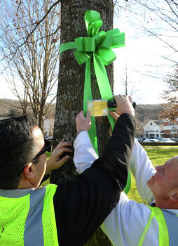 Marc Angarano,  left, and Adam Zontok, both from Brickman Group, which is a national landscaping company, places a nametag onto a green ribbon with a Allison Wyatt's name on it, after they put the ribbons on 26 trees on Southbury Green property along Main Street in Southbury Conn. on Thursday December 20, 2012. The ribbons were placed in memory of the victims of the mass shooting at Sandy Hook Elementary School his past Friday. The workers also placed a tag on each ribbon with a victim's name, including Allison Wyatt, whose funeral was taking place down the street. Photo: Christian Abraham / Connecticut Post