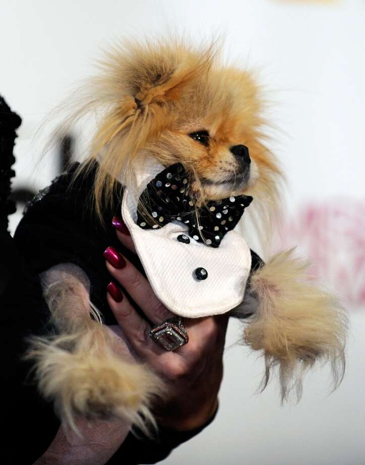 Television personality and pageant judge Lisa Vanderpump holds her dog Giggy as they arrive at the 2012 Miss Universe Pageant at Planet Hollywood Resort & Casino on December 19, 2012 in Las Vegas, Nevada.  (Photo by David Becker/Getty Images) (Getty Images)