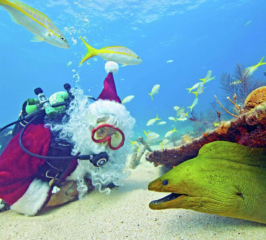 In this Tuesday, Dec. 18, 2012, photo released by the Florida Keys News Bureau, Spencer Slate, garbed as a scuba-diving Santa Claus, eyes a green moray eel while submerged off Key Largo, Fla., in the Florida Keys National Marine Sanctuary. During the holiday season, Slate dresses as Santa to entertain his dive shop customers and to help raise funds for a local children's charity. Photo: Bob Care, Associated Press / Florida Keys News Bureau