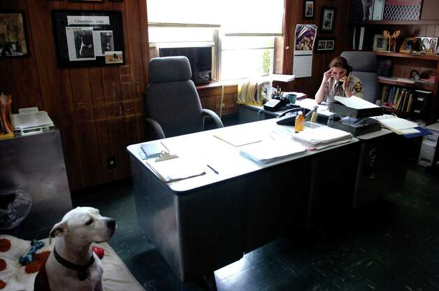 Suzanne Carlin fields calls as her adopted Pit Bull Mikey listens. Photo: Keelin Daly / Greenwich Time